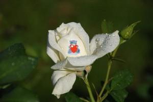 Говорящие цветы - свой бизнес