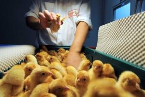 Бизнес в Австралии: фермы и бистро