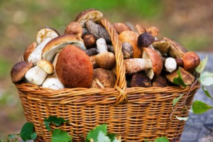 Бизнес-идея: выращивание грибов на дому