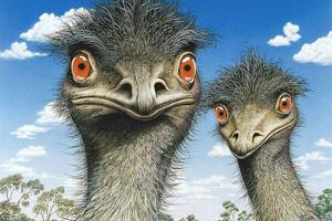 Свой бизнес - страусиная ферма